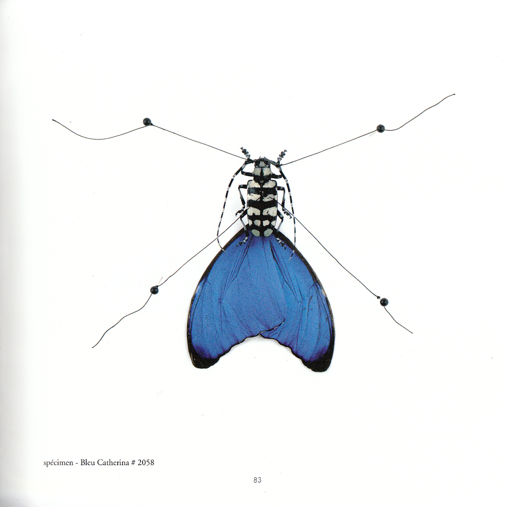 metamorphose rancinan specimen